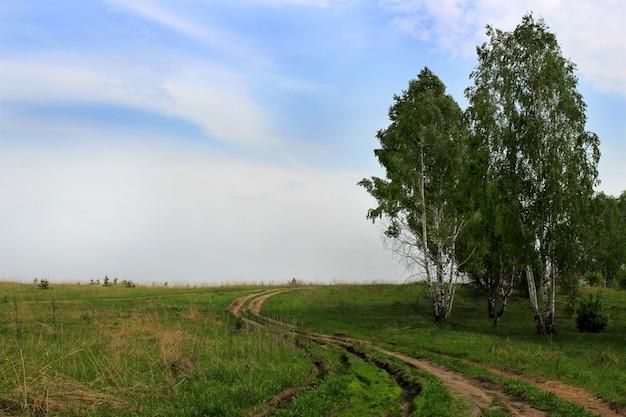 Грунтовая дорога в поле в летний день Premium Фотографии