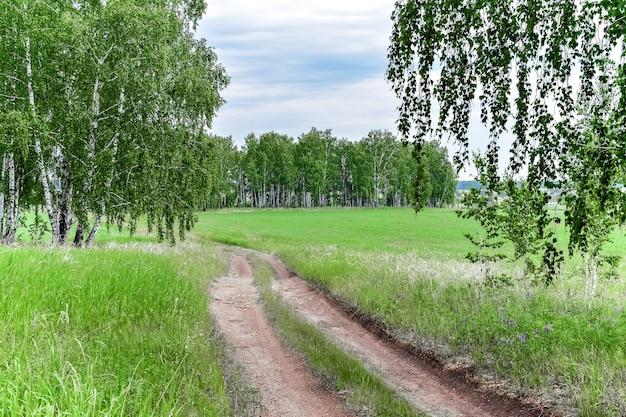 Грунтовая дорога проходит через березовый лес и поле в солнечный день