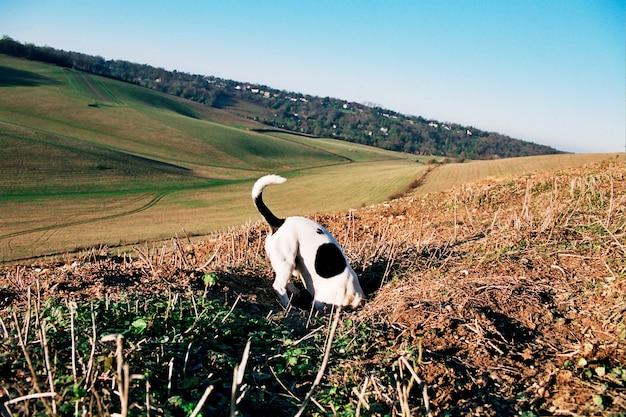 犬の狩猟。