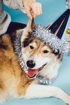 Собака в праздничной шапке на фоне подарков