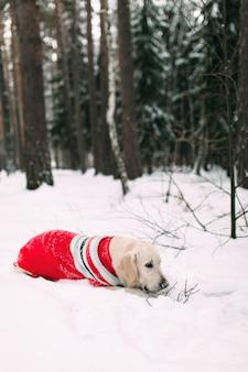 Собака в заснеженном лесу грызет ветку с дерева