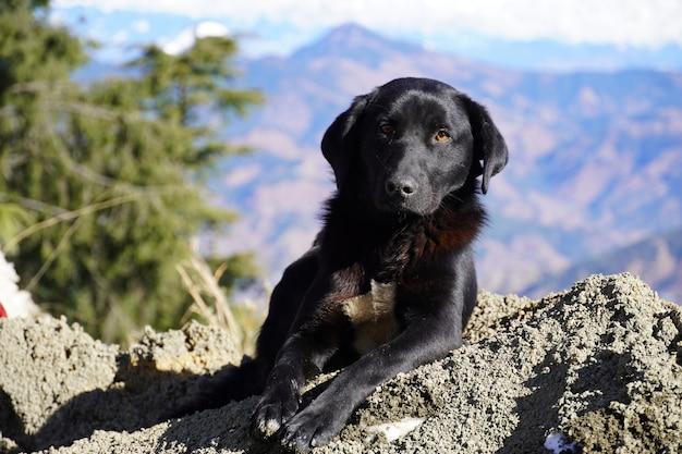 山の美しい黒い犬の犬