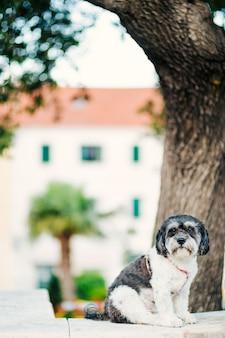 도시의 개가 주인을 기다리고 있습니다