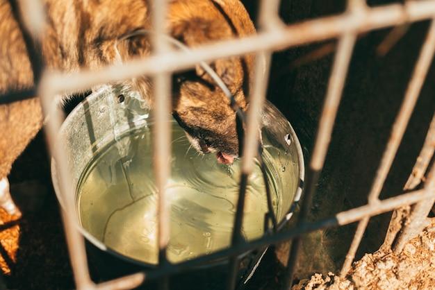 Собака пьет воду за решеткой в приюте.