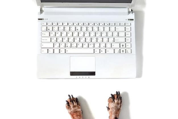 犬はラップトップコンピューターを備えたモダンなオフィスの白い机で働いています。コピースペースで犬の手の上面図。孤立した白い背景バナー、フラットレイ。