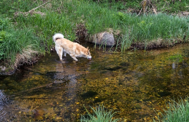 강 위의 개