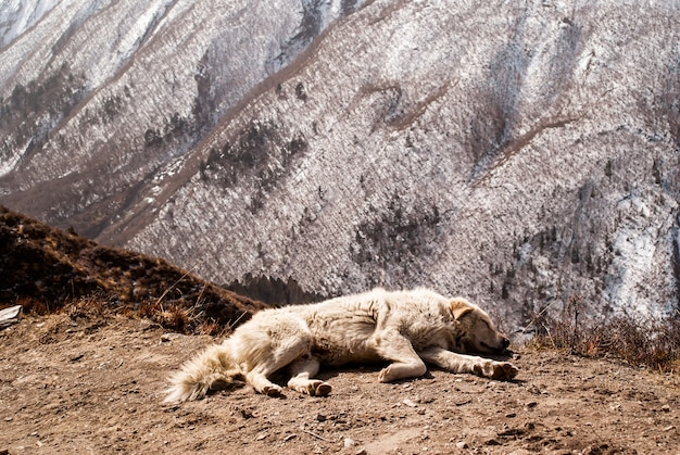Собака спит у подножия тропы в горах
