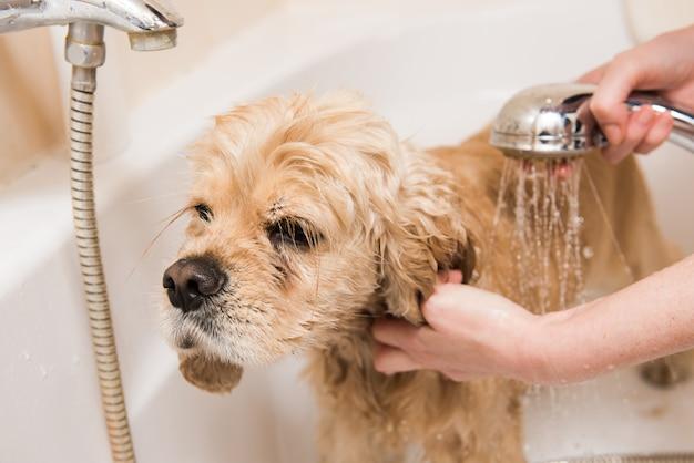 シャワーを浴びている犬
