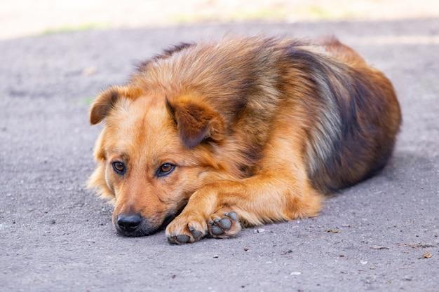 悲しそうな顔をした犬が庭に横たわっている