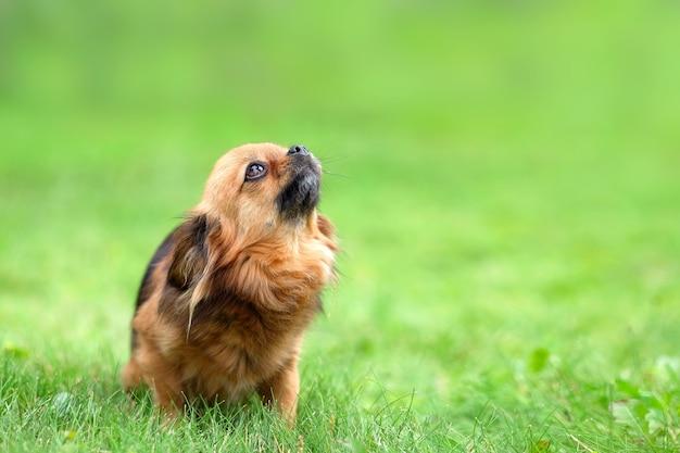 悲しそうな目を持つ犬。クローズアップ、ポートレート