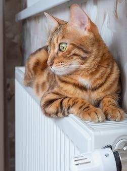 Домашняя кошка сидит на батарее отопления. милый питомец отдыхает на теплом обогревателе. отопительный сезон