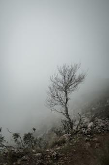 冬の霧深い天候で山の頂上の崖の隣に立っている乾燥した傾斜した小さな木。スペイン、グラサレマ。