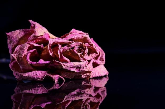 乾いた赤いバラは、鏡に映った黒い背景の上にあり、そこに映っています。