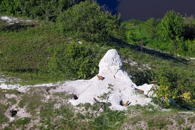 チョークから山の穴にいるマーモットの家族。