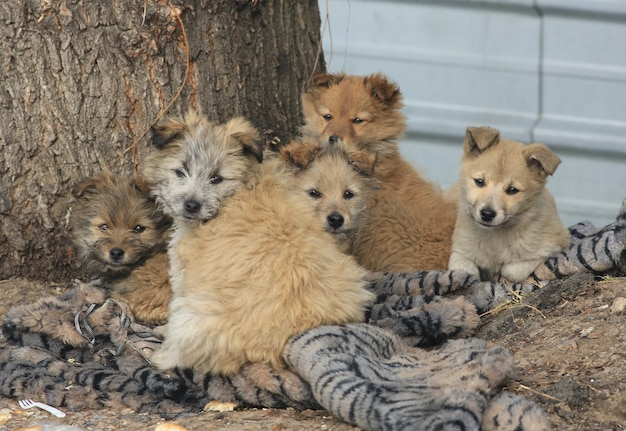 路上で野良犬の家族