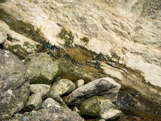 강둑에서 쉬고 있는 노란 나비 가족