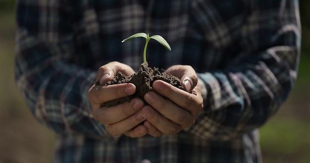 Фермер руки держит саженец семенного растения органическая ферма экологическое сельское хозяйство урожай начало сезона посадки