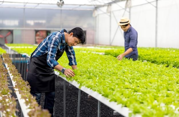농부가 수경재배 정원에서 채소를 수확하고 있습니다. 유기농 신선한 재배 채소와 수경 재배 채소밭이 있는 온실에서 일하는 농부들.