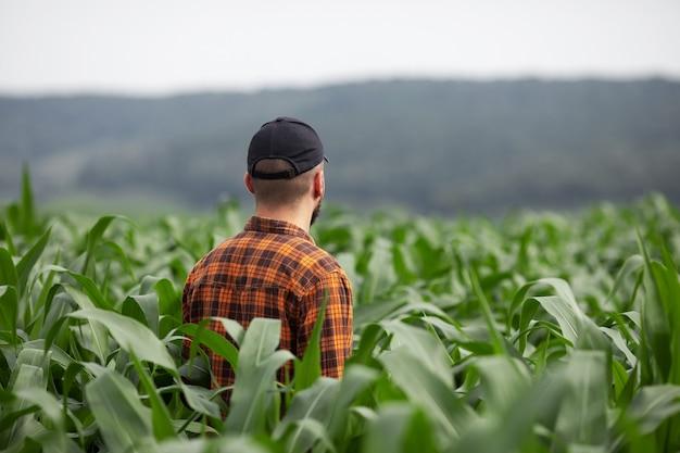 農夫は大きな緑のトウモロコシ畑を検査します。