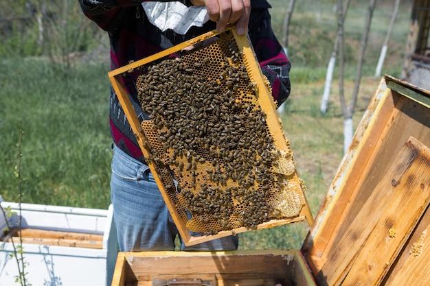 ミツバチ養蜂場の農家は、ワックスハニカムのフレームを持っています。蜂蜜の収集のための計画された準備。