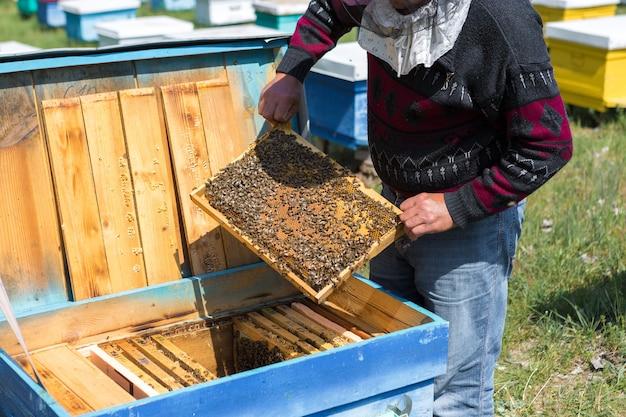 ミツバチ養蜂場の農家がワックスハニカムのフレームを持っているコレクションの計画された準備