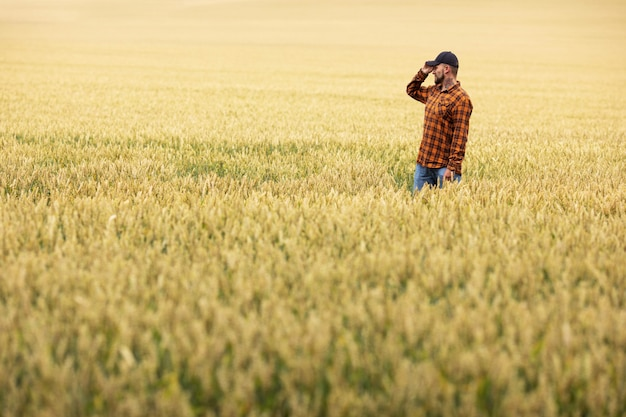 農夫は黄金の小麦畑の真ん中に立って小麦の穂を検査します。