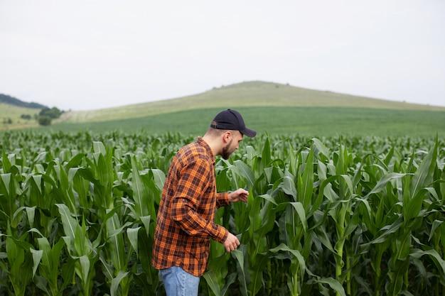 農夫はトウモロコシの成長の大きな緑のフィールドで働いています。