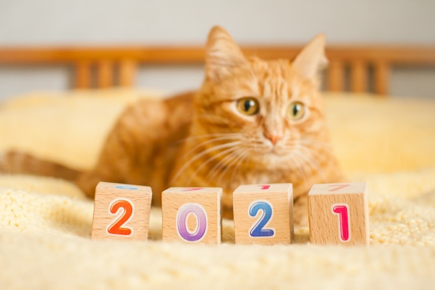 뚱뚱한 생강 고양이와 노란색 니트 담요에 어린이 큐브의 숫자 2021. 새해