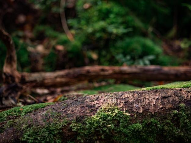 다른 쓰러진 나무의 배경에 대해 숲에 쓰러진 나무