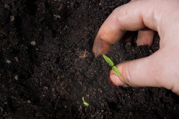 女性の手が地面に小さな緑の芽を置きます