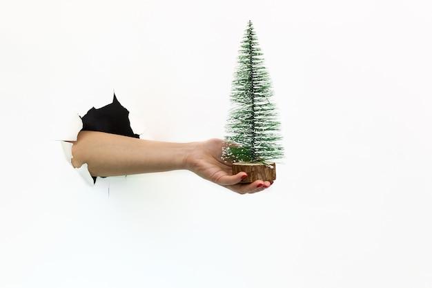 白い背景の破れた穴に赤いマニキュアを持つ女性の手は、木製のスタンドに小さな緑のクリスマスツリーを保持しています。破れた白い紙を手渡します
