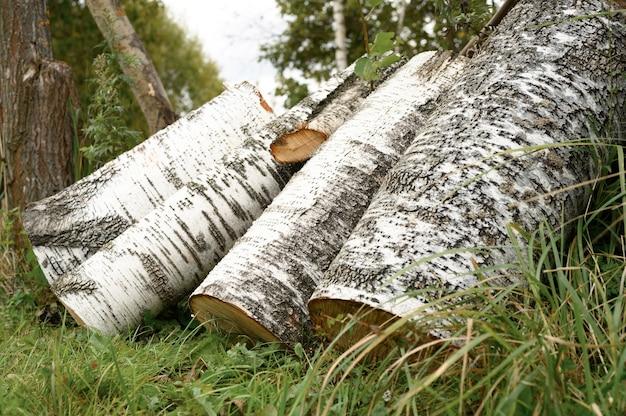 草の上にいくつかの白樺の製材された丸太