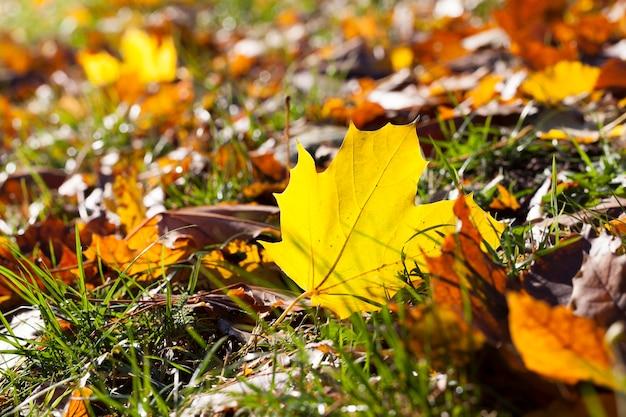 Несколько листьев лежат на траве, освещенной солнечным светом, осенняя поляна с травой