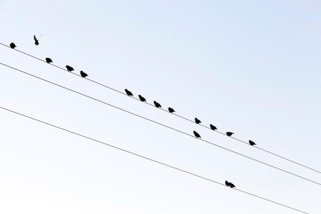 하늘을 향한 고전압 전기 기둥에 앉아있는 작은 새 몇 마리가 휴식을 취합니다. 클로즈업 하단 촬영.