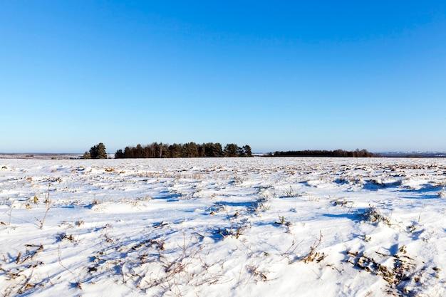 雪に覆われた畑は一言も漂わない。