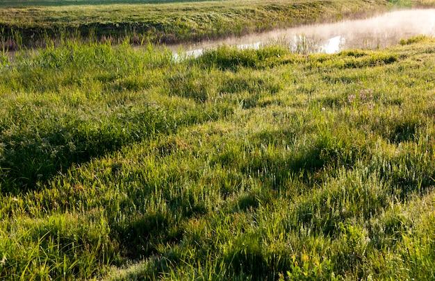 여름에 습지대의 영토에 물로 덮인 들판, 아침 안개가 물 위에 서 있습니다.