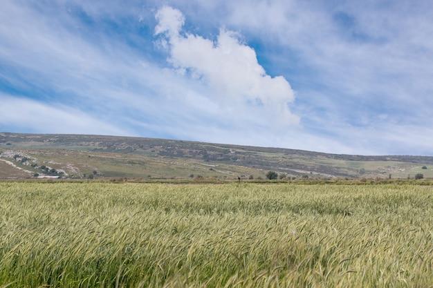 Поле травы в солнечный летний день