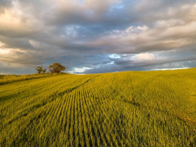 劇的な空を背景に日没時の若い小麦の畑信じられないほどの風景