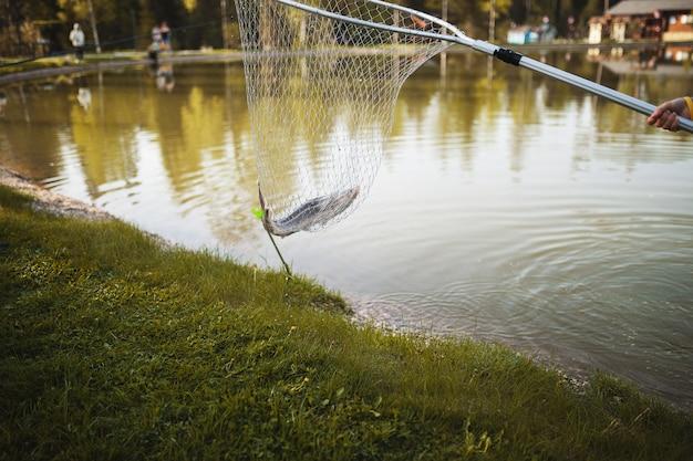 漁師が湖のほとりの網で魚を捕まえた