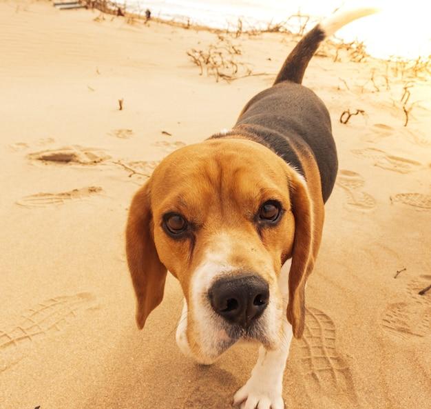 Подтянутая и здоровая собака стоит на безлюдном пляже