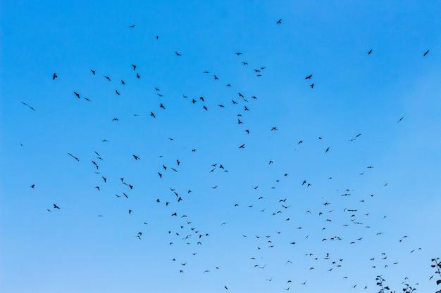 푸른 하늘을 배경으로 새 떼_