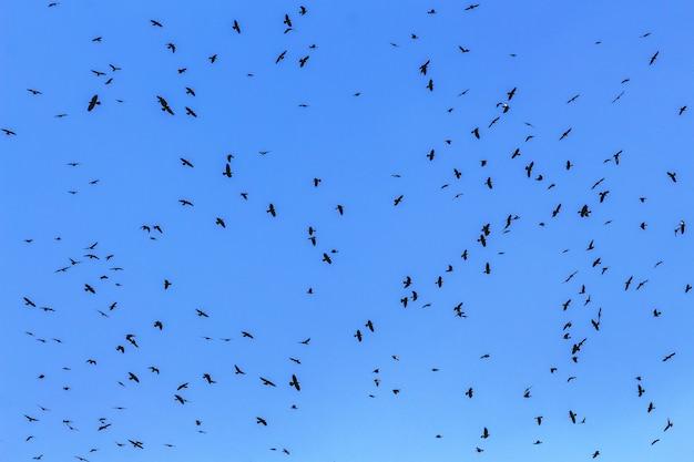 Стая птиц на фоне голубого неба крупным планом_