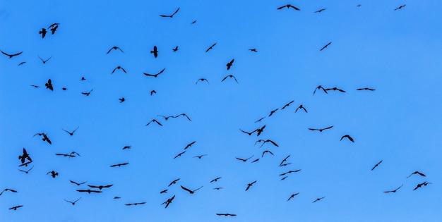 青い空を背景に鳥の群れがクローズアップ_