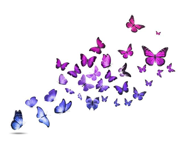 흰색 배경에 고립 된 다채로운 비행 나비의 무리. 고품질 사진