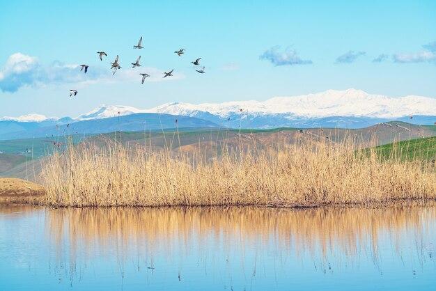 Стая уток летит над озером