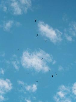 ガラパゴス諸島で飛んでいるガラパゴスミズナギドリの群れ