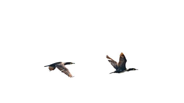 하늘을 나는 철새 떼
