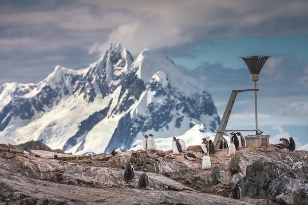 Стая пингвинов на поверхности скалы рядом с метеорологическим оборудованием исследования вернадского.