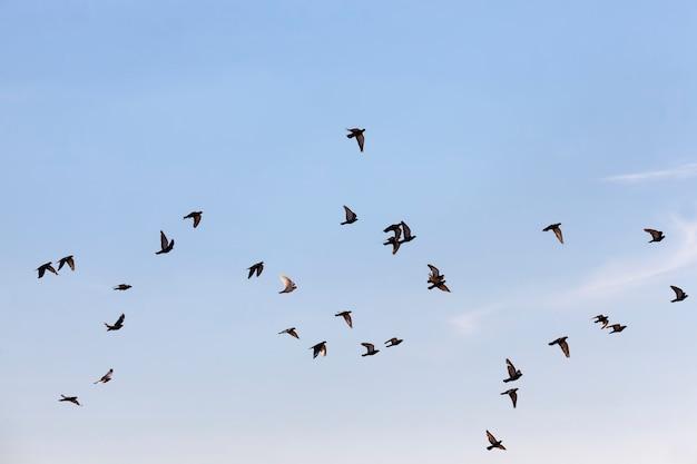 青い空を飛んでいる鳩の群れ
