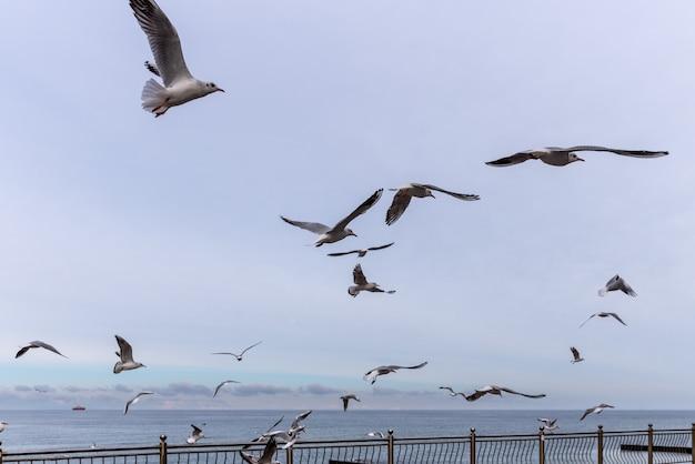 カモメの群れが遊歩道近くのバルト海を飛ぶ